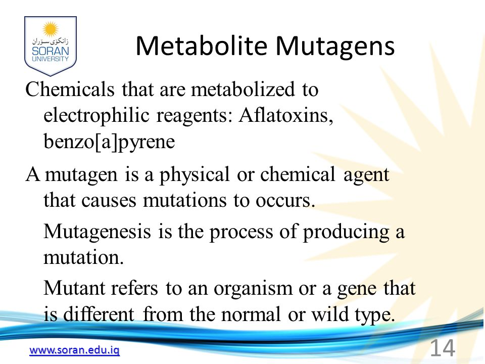 Metabolite Mutagens Chemicals that are metabolized to electrophilic reagents: Aflatoxins, benzo[a]pyrene.